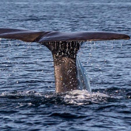 whale_phishing_-_thumbnail.jpg
